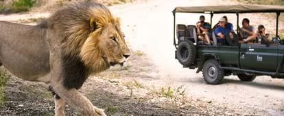 El Parque Nacional Kruger Un Destino De Safari Que No Se