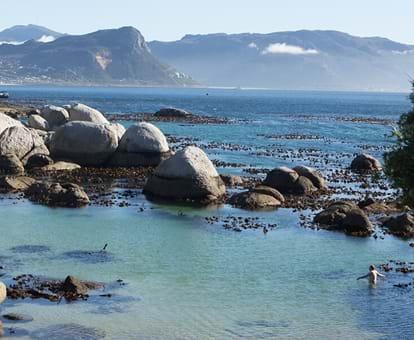 Pingüinos De La Playa Boulders Puede